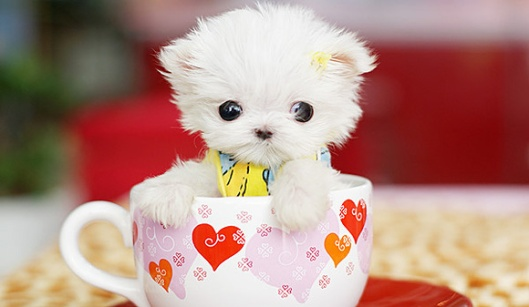 Cute fluffy puppies! | Blazing Ardor