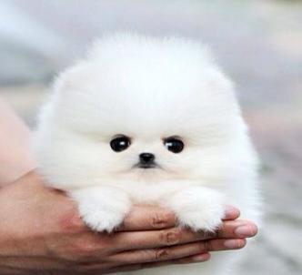 fluffy puppy!