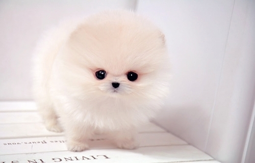 fluffy baby dogs - photo #7